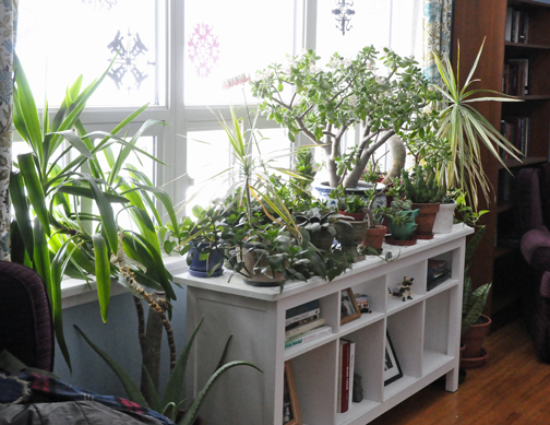 Frustrated by being housebound, we can over-do houseplant care. Don't let your beautiful collection slide downhill. Check this compendium of indoor gardening advice for the end of winter.