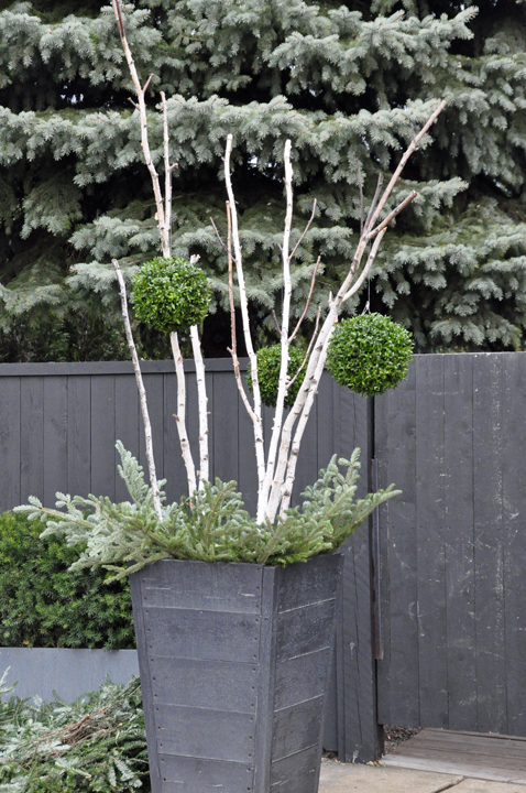 White birch or poplar branches hung with boxwood balls, and fir at their feet.