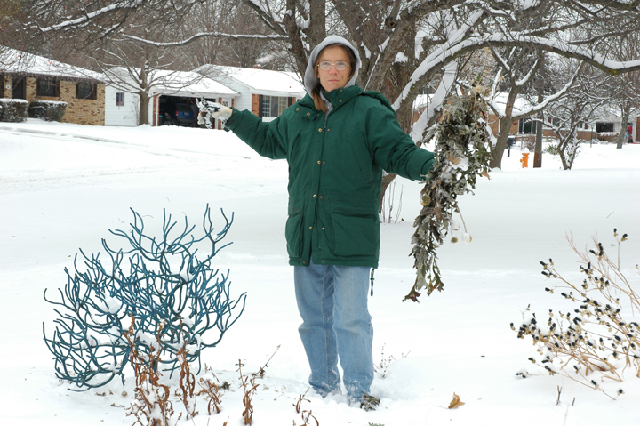 "During each its first ten winters in our yard, this staking sculpture got the attention of one or another of our neighbors. They would ask, ""What is that blue bush in your yard?"""