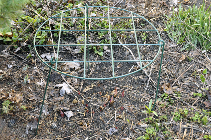 We like the grow-thru grids best of the staking kits we can buy. They're quick to place, and unseen once the plant grows through.