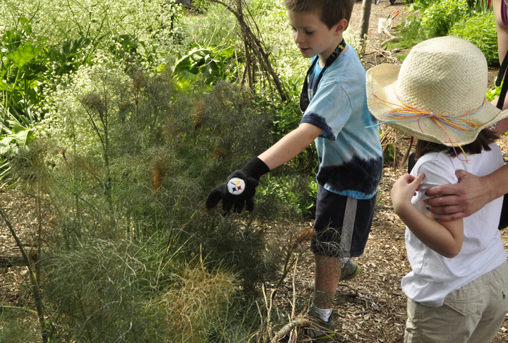 Alex Grady is already a caterpillar pro, helping other kids discover the black swallowtail caterpillars on this fennel at our Detroit Zoo Adopt-a-Garden