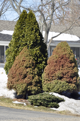 Trouble can appear to be a sudden development in spring. Here's how to recognize winter's effects in time to deal with them quickly and easily.