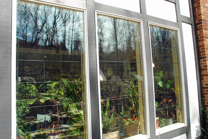 All windows are not created equal. Some plants fry fdin that quick-changing light and heat. Those on our list will thrive.