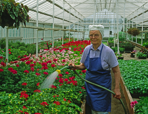 Sylvia Graye, watering virtuoso for over 80 years in her business, Graye's Greehouse. She knew clay pots tapped with a stick would ring as they became dry, sound with a thud if moist.