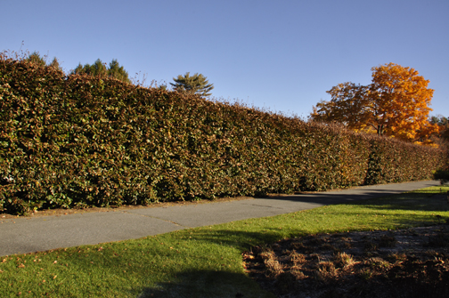 You can make a big hedge to create that privacy you want.