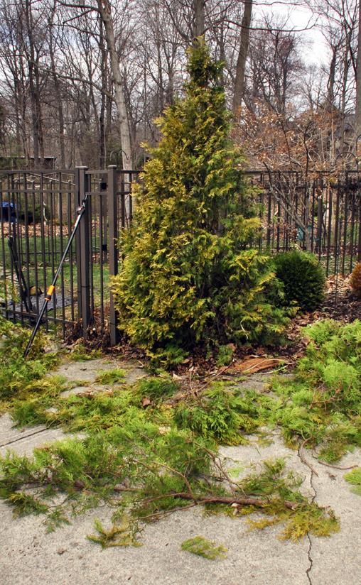 Garden A To Z Arbs Cut In Time