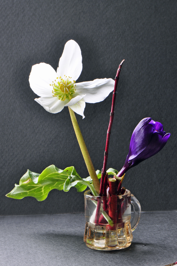 Hate to miss spring in your garden? Take it to work. Think of the smiles you'll create even displaying one hellebore and one crocus with a redtwig dogwood stem and a single leaf of Aum itailcum.