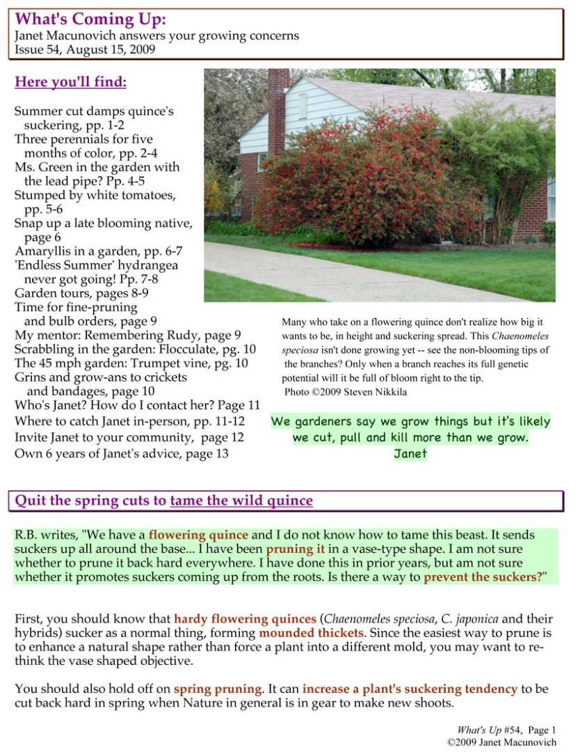 Garden A to Z | What\'s Up 54