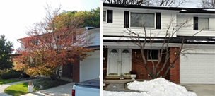 Oh, what have you done to that Japanese maple?! No worries! Read on!