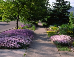 In this issue: Step by step through designing and planting a lawn-free, no-mow parking strip.